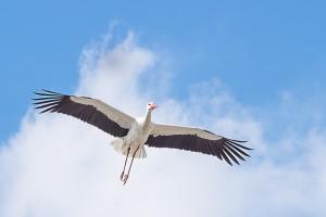 stork-1288629_1920