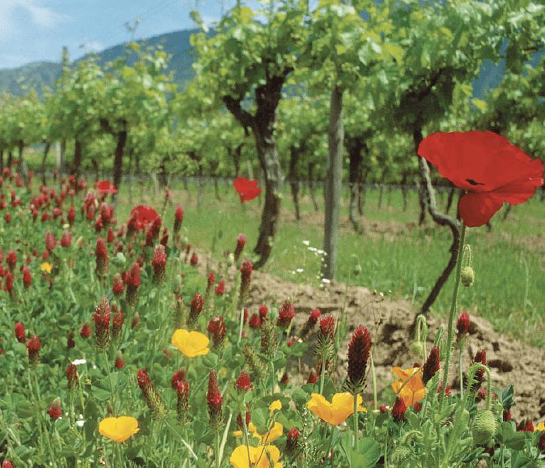 Demeter wijn